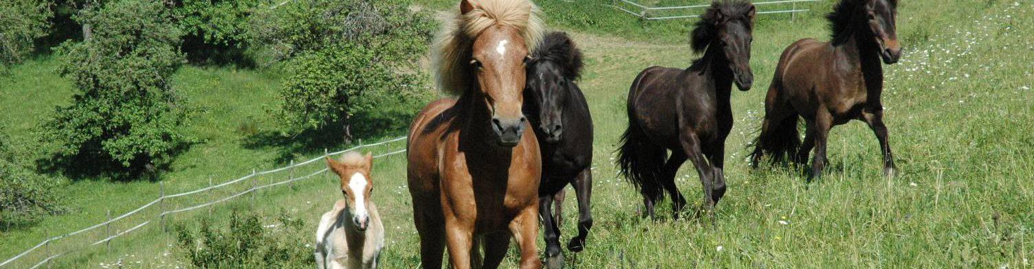 Pferdehof Untere Alp